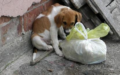 Neodgovorno vlasništvo uzrok je sve većeg broja pasa lutalica u BiH