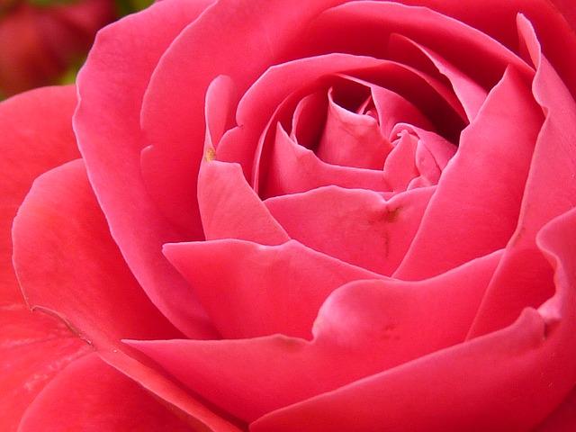 boje roza