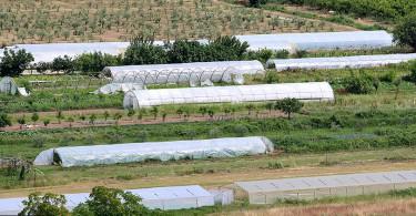 poljoprivreda_plastenici_1