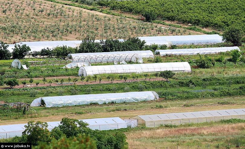 poljoprivreda_plastenici_2
