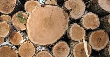 drva-stabla-sjeca