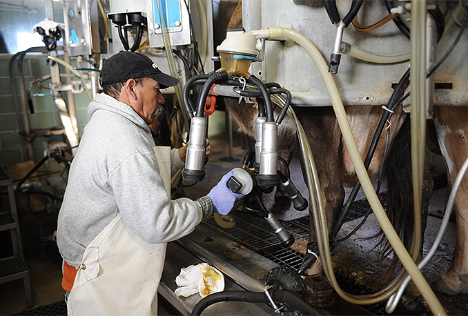 mlijeko-farma-stocar