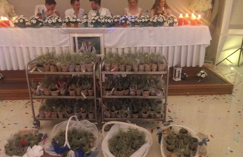 smilje hercegovina svadba svatovi