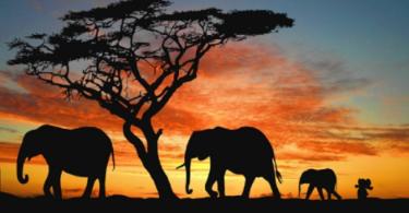 slonic 1