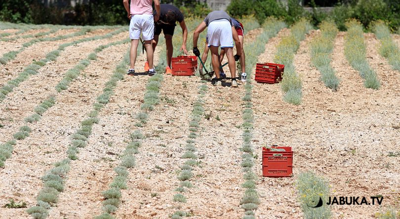 Poljoprivrednici koji se prijavljuju na web mjesto