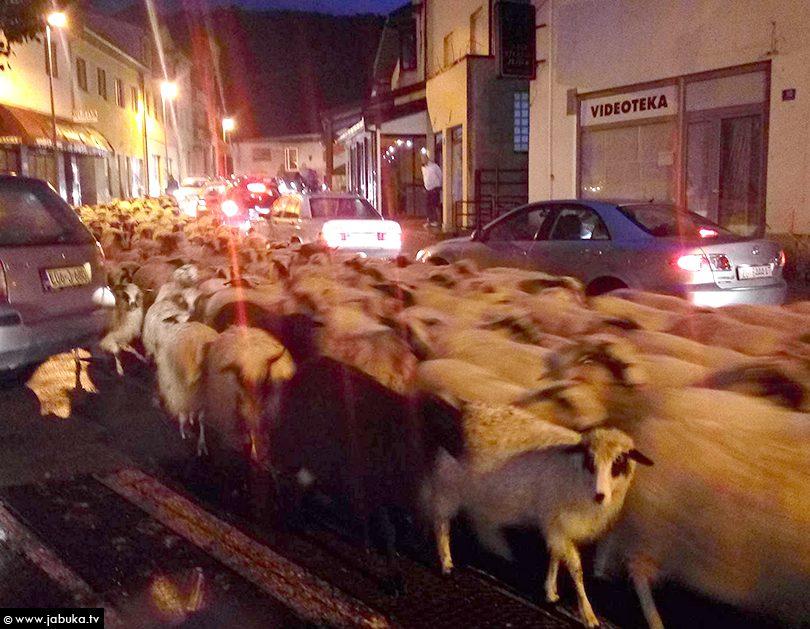 Ovce Široki Brijeg