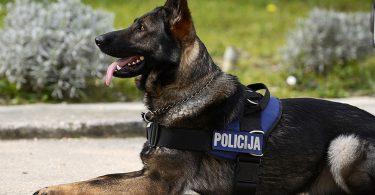 policijski_pas_1