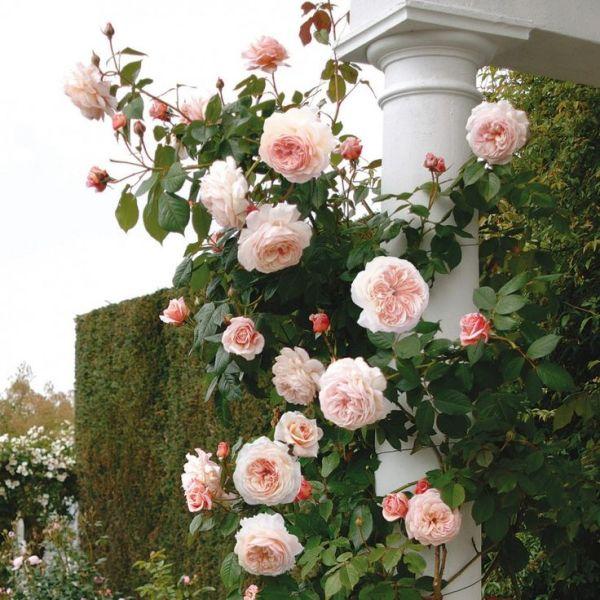 Web stranica za upoznavanje s ružama