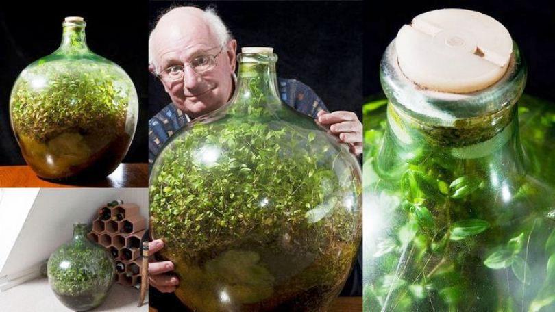 """Zapanjujući primjer fotosinteze: """"Vrt"""" u zatvorenoj boci nije zalijevan preko 40 godina!"""