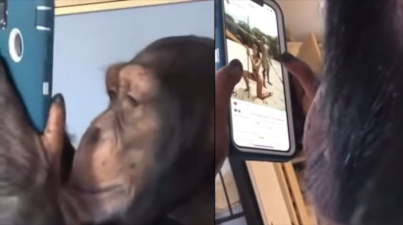 porno s velikim cockima